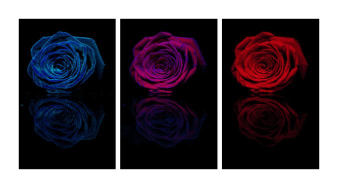 rose-trip
